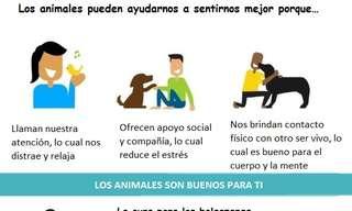 ¡Las Mascotas Nos Hacen Más Felices!
