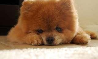 ¿Crees Que Este Es Un Perro o Un Muñeco?