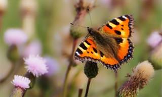Test: ¿Qué Colorida Mariposa Va Con Tu Personalidad?