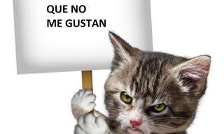 Coge Papel y Lápiz: ¡20 Cosas Que Los Gatos Odian!