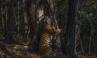Estas 15 Fotos De La Vida Salvaje Capturan Maravillosamente La Naturaleza