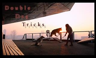 Admira Cómo Estos Perros Tan Inteligentes Realizan Trucos