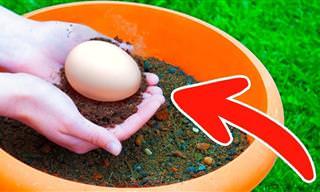 Pon Un Huevo Crudo En Tu Maceta y Verás Lo Que Ocurre