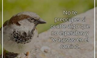 Deberíamos Aprender De Los Pájaros Esta Lección De Vida