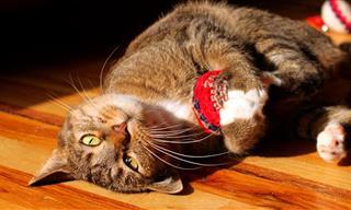 No Hay Nada Más Tierno Que Unos Gatitos Con Sus Juguetes
