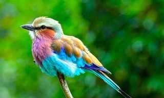 26 Animales Con Deslumbrantes Colores