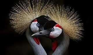 Majestuosa Fotografía Artística De Aves