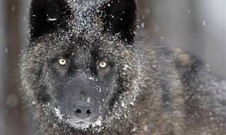 Invierno En El Reino Animal