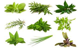 Conoce Lo Que Las Plantas Aromáticas Pueden Hacer Por Ti