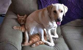 Travesuras Poco Simpáticas De Los Caninos