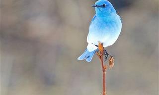 19 Hermosos Pájaros Que Jamás Has Visto Antes