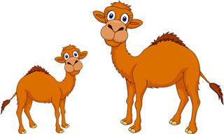 Este Chiste Comienza Con Un Camello Bebé Muy Curioso