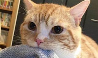 Cuando Los Gatos Atacan... ¡Corre a Esconderte!