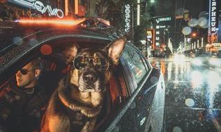 Conoce a Las Estrellas Policiacas Caninas De Vancouver
