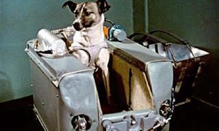 5 Históricos Perros Que Recordaremos Para Siempre
