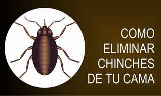 Cómo Prevenir Las Infestaciones De Chinches De Cama