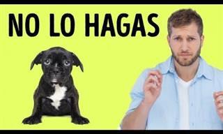12 Cosas Que Tu Perro No Quiere Que Le Hagas