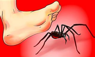 Qué Hacer Cuando Ves Una Araña