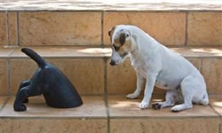 Estos 13 Perros No Entienden Lo Que Está Pasando...