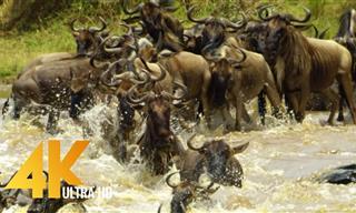 Espectaculares Imágenes Aéreas De La Fauna De Kenia