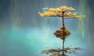 15 Frases Zen Para Reflexionar