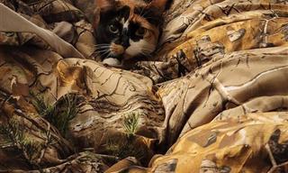 Estos Divertidos Animales Entienden De Camuflaje