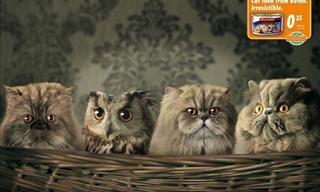 16 Anuncios Que Comprueban Por Qué Los Gatos Son Los Mejores Modelos
