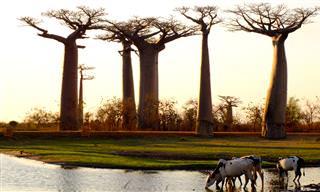 Las 10 Atracciones Más Asombrosas Para Ver En Madagascar