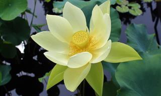16 Plantas Que Demuestran Que La Belleza De La Naturaleza