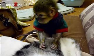 Es Imposible Que Estos Animales No Te Han Sonreír...