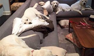 El Día a Día En Una Casa Llena De Perros