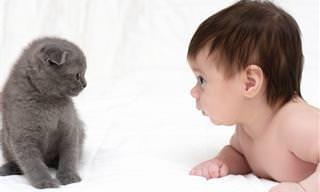 Aprende a Interpretar Lo Que Tu Gato Quiere Decirte