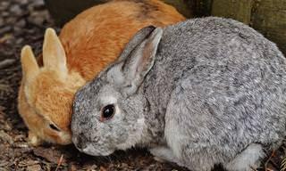 14 Imágenes De Animales Expresando Su Amor