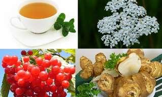 Hierbas Medicinales Para Uso Femenino