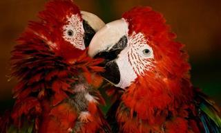 Hermosas Imágenes De Animales Demostrando Afecto
