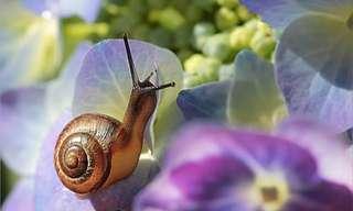 Tips Para Mantener Las Plagas Lejos Tu Jardín