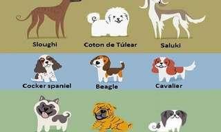 ¿Cuál Es El Origen De Tu Perro?
