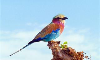 Las Más Exóticas y Hermosas Aves De Todo El Mundo