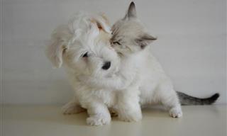 8 Hierbas Que Son Especialmente Buenas Para Las Mascotas