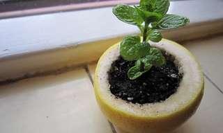 Prácticas Ideas Para Incursionar En La Jardinería