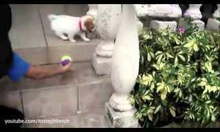 Cachorros Vs Escaleras