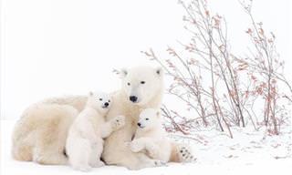 Fotógrafo De La Vida Silvestre Europea Del Año: Edición 2017
