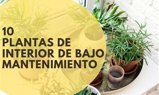 10 Plantas De Interior De Bajo Mantenimiento Que Prosperarán En Tu Hogar
