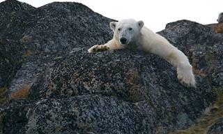 10 Especies En Peligro De Extinción
