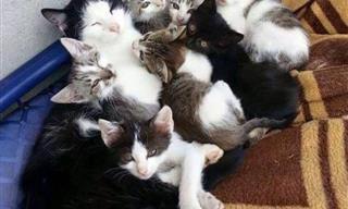 Adorables Animales Que Saben La Importancia De La Familia