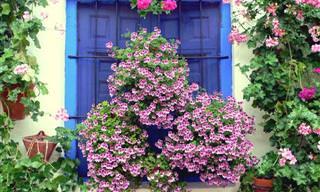 La Ciudad De Las Flores Se Encuentra En Córdoba