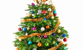Chiste: Dos Rubias Buscando Un Árbol De Navidad
