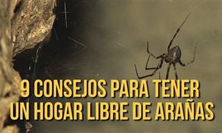 Haz Que Tu Casa Sea Un Hogar Libre De Arañas