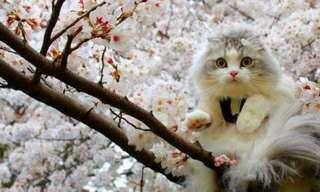 ¡Un Nuevo Día De Gatos!