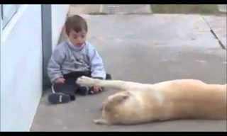 Hermoso Momento Entre un Bebé y Un Perro
